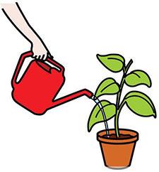 Come coltivare l 39 aloe arborescens for Annaffiare le piante