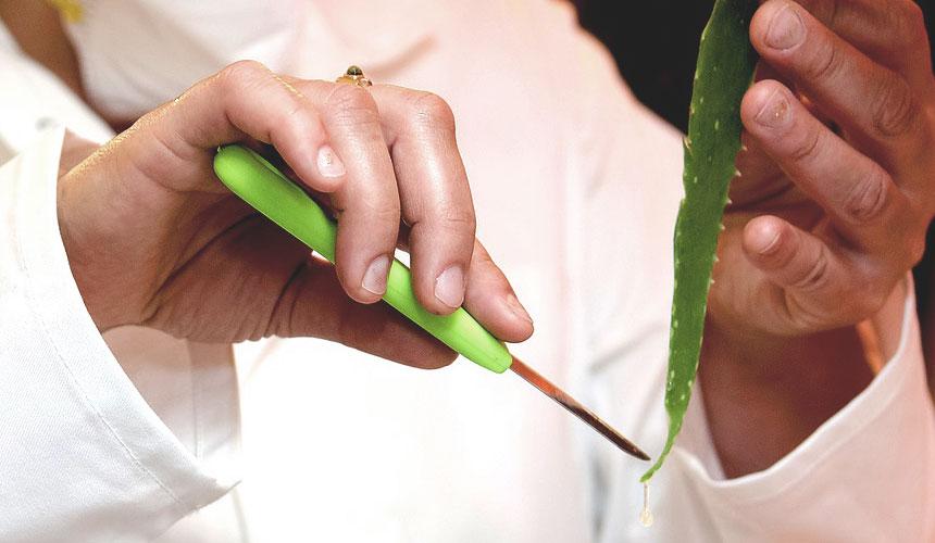 Studi scientifici confermano le proprietà dell'Aloe Arborescens