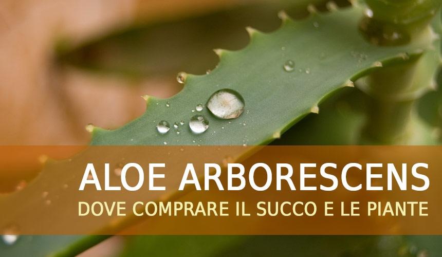 Aloe arborescens dove comprarla