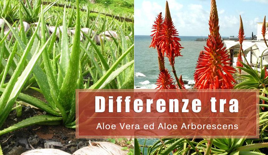 Che differenza c'è tra l'Aloe Vera e l'Aloe Arborescens?