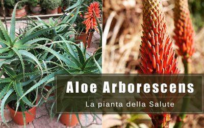 Aloe Arborescens. Proprietà e benefici della pianta della Salute.