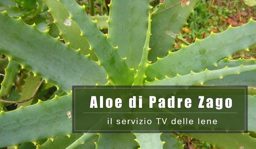 Servizio delle Iene: i benefici della ricetta all'Aloe di Padre Zago