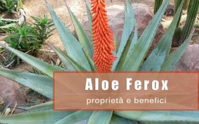Aloe Ferox: proprietà e benefici