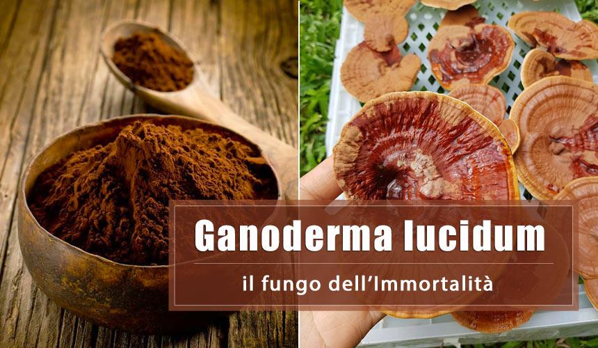 Reishi: 8 incredibili benefici del Ganoderma Lucidum