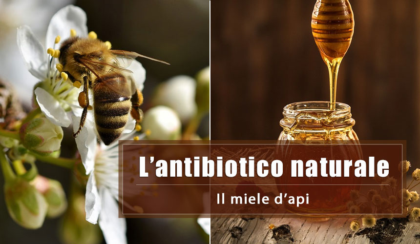 Il miele d'Api: un potente antibatterico naturale