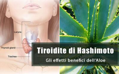 L'Aloe per la cura della tiroidite di Hashimoto: un recente studio conferma questa possibilità