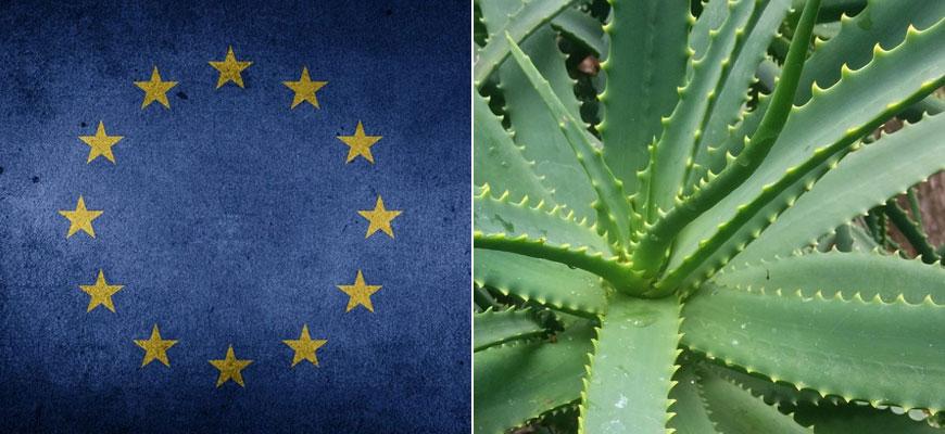 L'Europa mette al bando l'Aloe! Quali interessi ci sono realmente dietro?